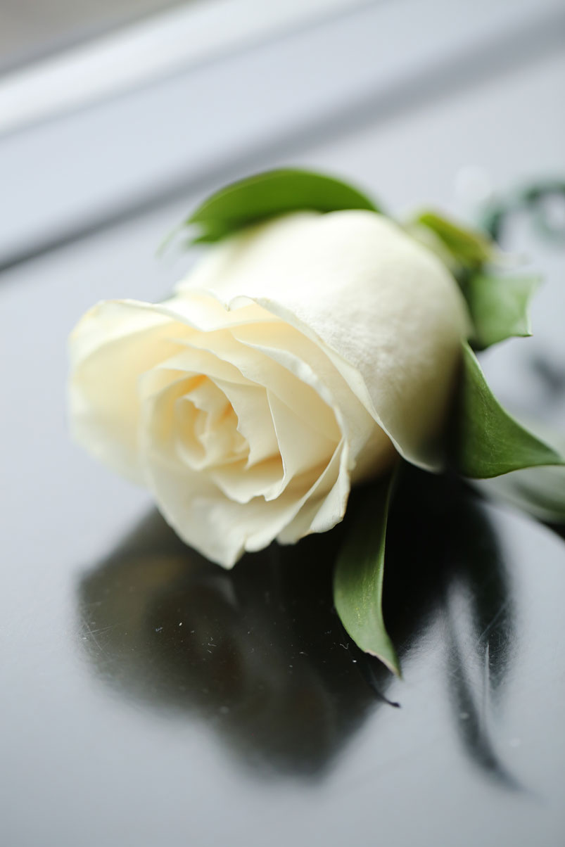 single-white-rose